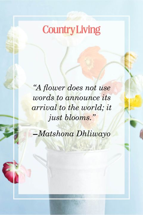 flower quote by matshona dhliwayo