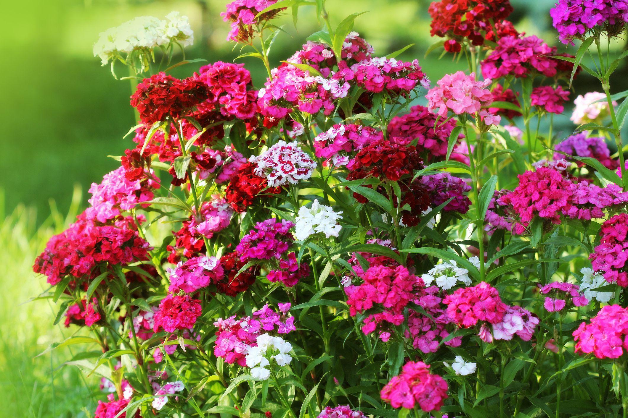 25 Best Fall Flowers for an Autumn Garden - Prettiest