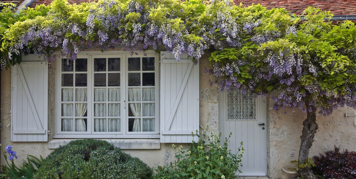 20 Gorgeous Flowering Vines to Add to Your Yard