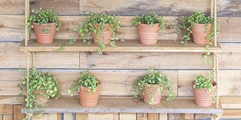 Flowerpots hang on wooden background in the garden