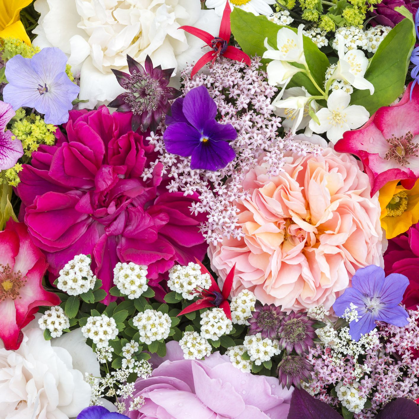 Fresh flowers can reduce pain and help tiredness study reveals