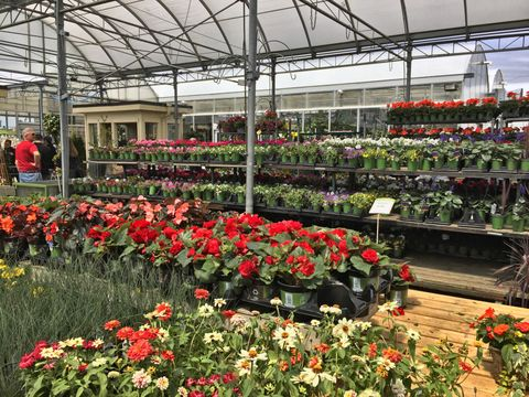 Garden Centre Boss Calls For Nurseries