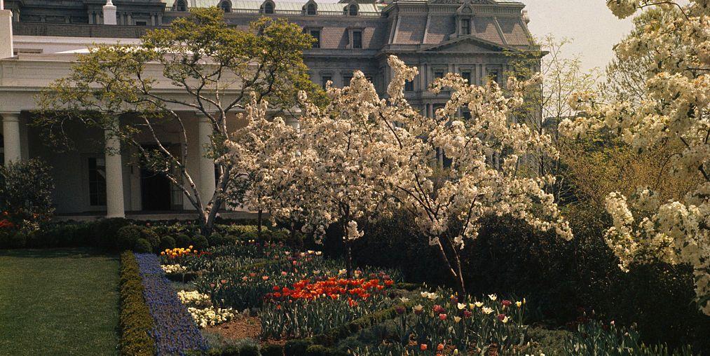 History Of The White House Rose Garden The Rose Garden S Design