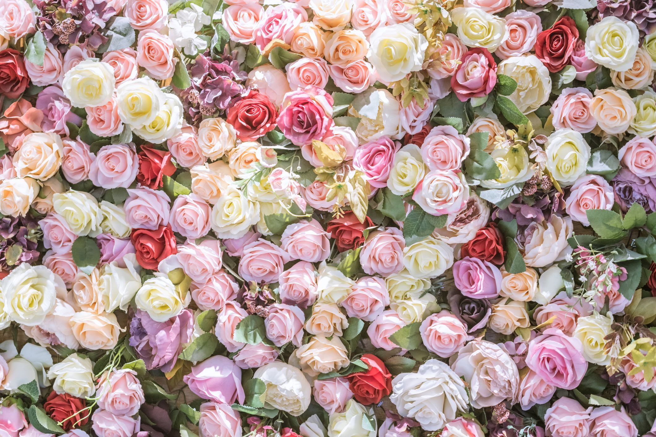 16 Rose Color Meanings Explained Roses For Every Occasion