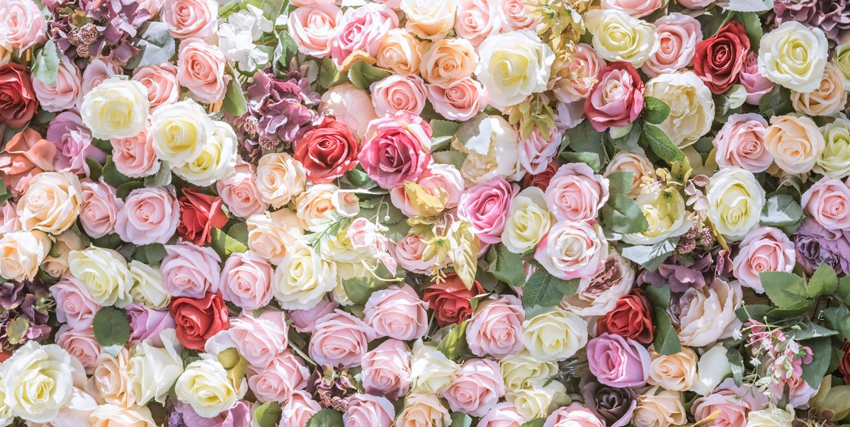 13 Rose Color Meanings Explained Rose Symbolism For Every Occasion