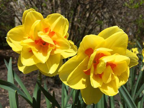 Spring Season Arrives In Toronto