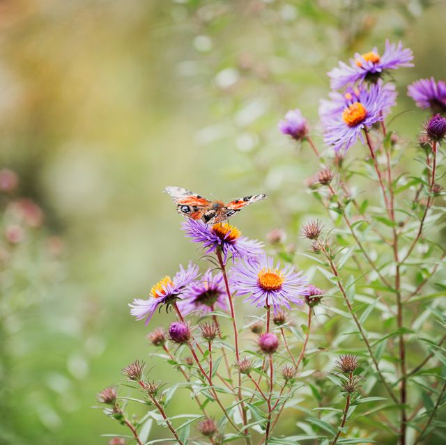 8 practical ways to save money on utility bills using your garden