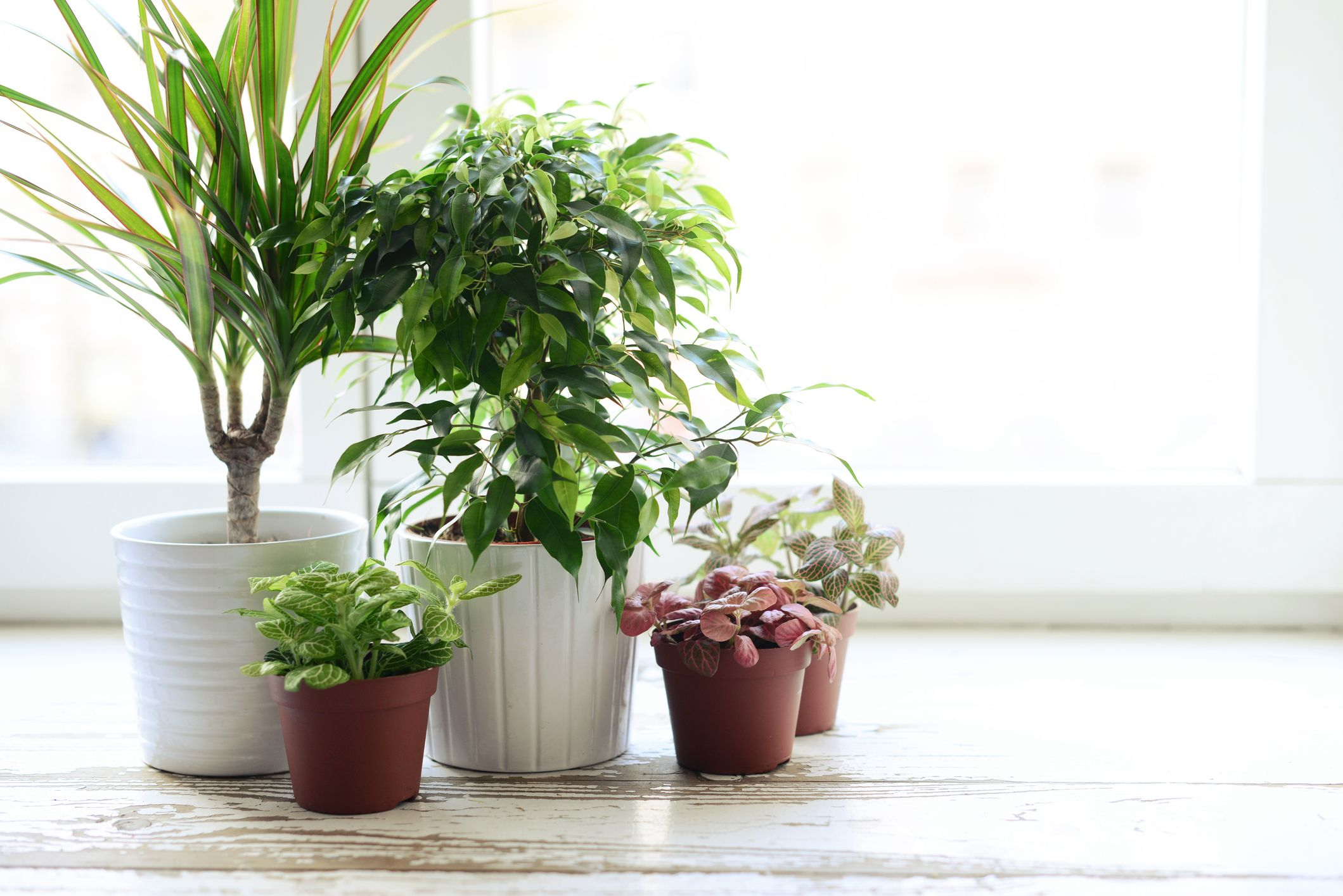 Move garden plants inside your home for winter over a two week period, experts say