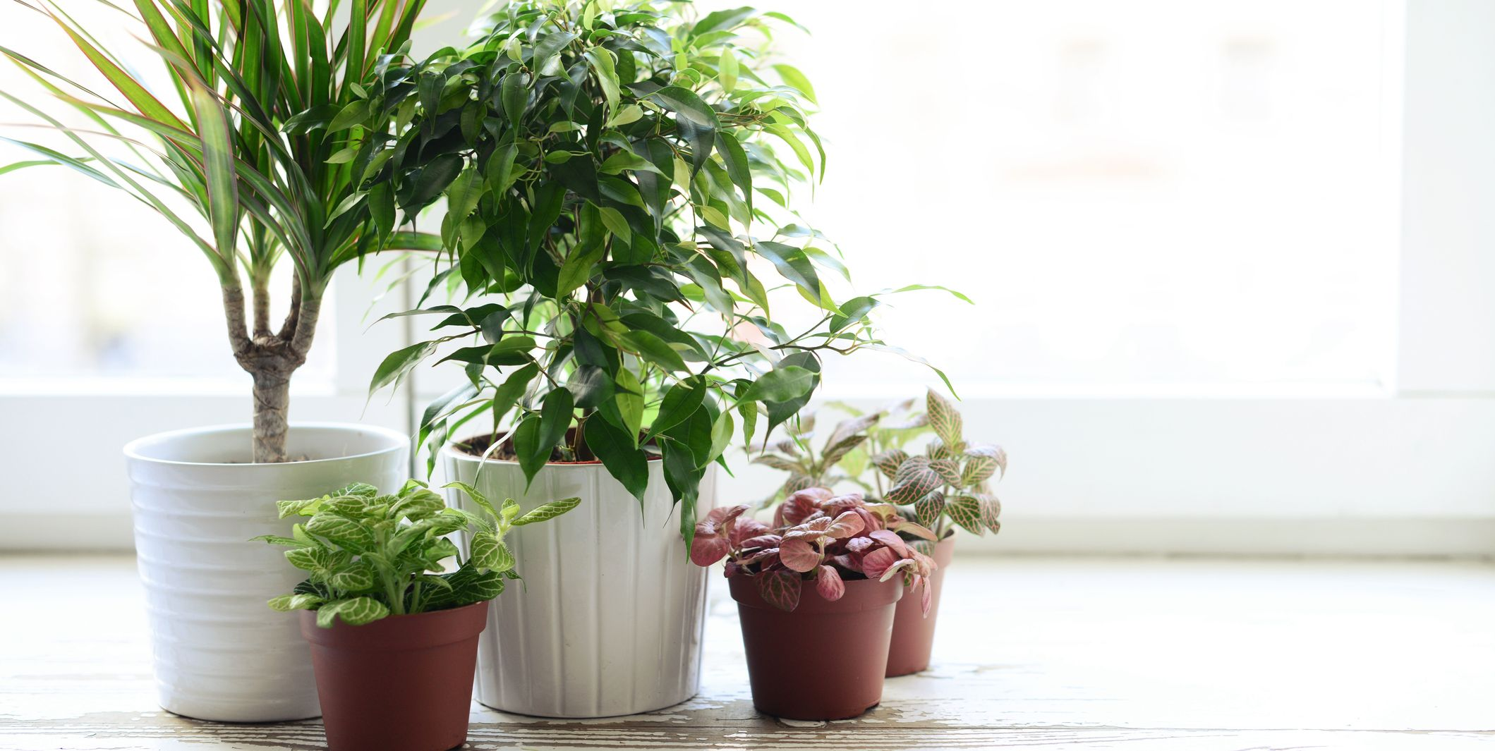5 of the best-smelling houseplants to make your home smell amazing