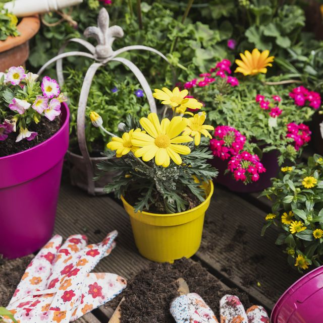 7 surprising mental and physical benefits of gardening