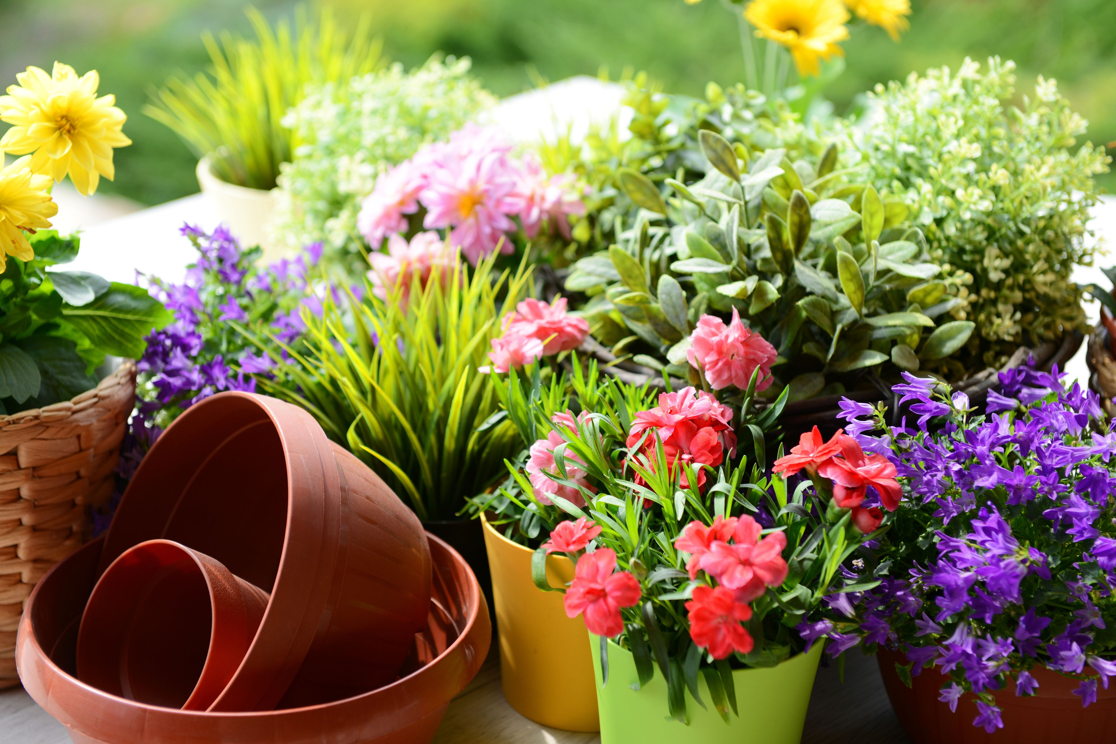 Good Housekeeping & Everything You Need to Know About Container Gardening