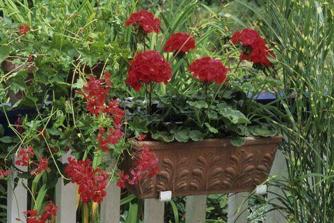 Flowers on Balcony