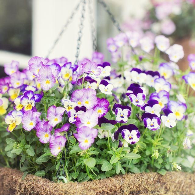 20 Flowering Plants That Attract Bees Pollinator Friendly Plants
