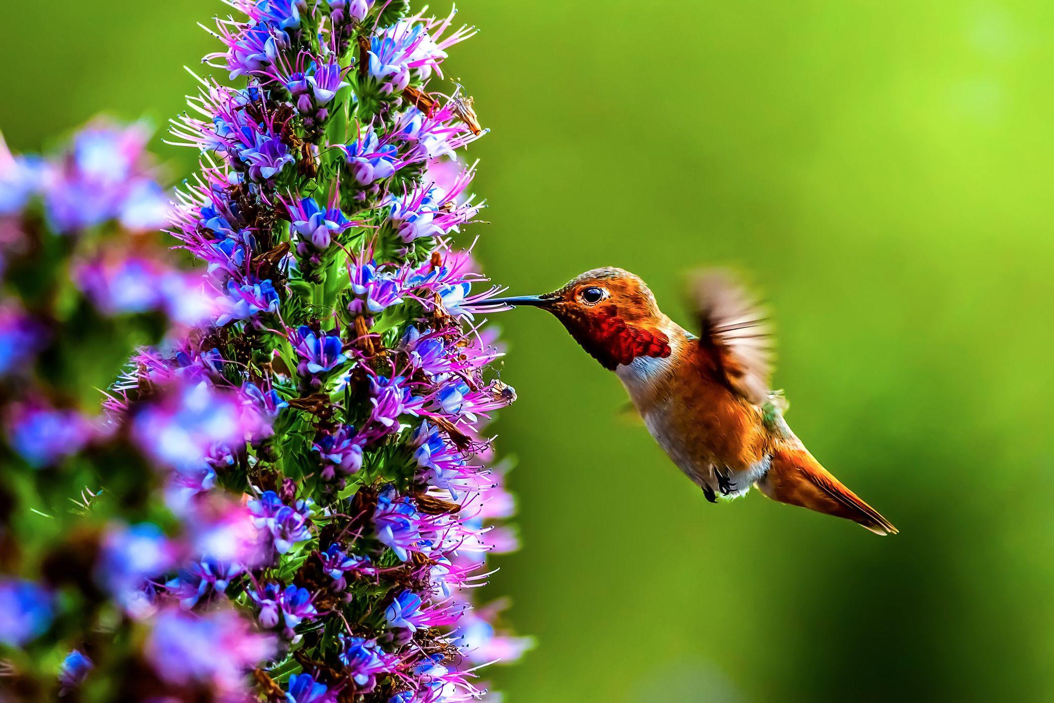 12 Flowers That Attract Hummingbirds Best Blooms For Pollinators