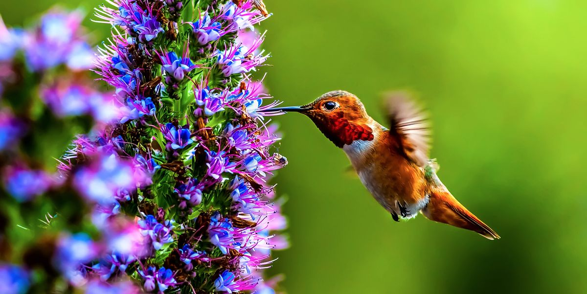 Show-Stopping Flowers that Attract Hummingbirds to Your Yard