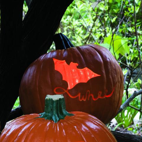 fly a kite: whee pumpkin