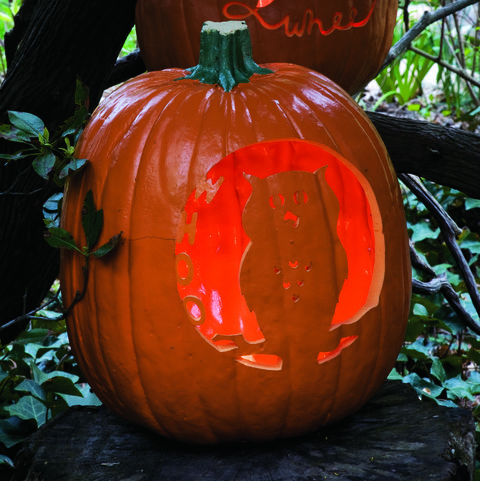 whoo is the wisest? pumpkin
