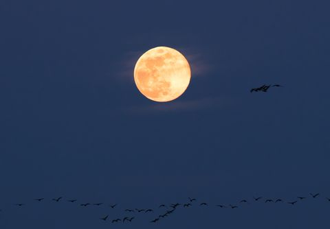 harvest moon in mid autumn