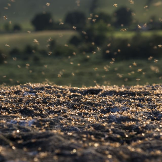 flying ants how to get rid of flying ants