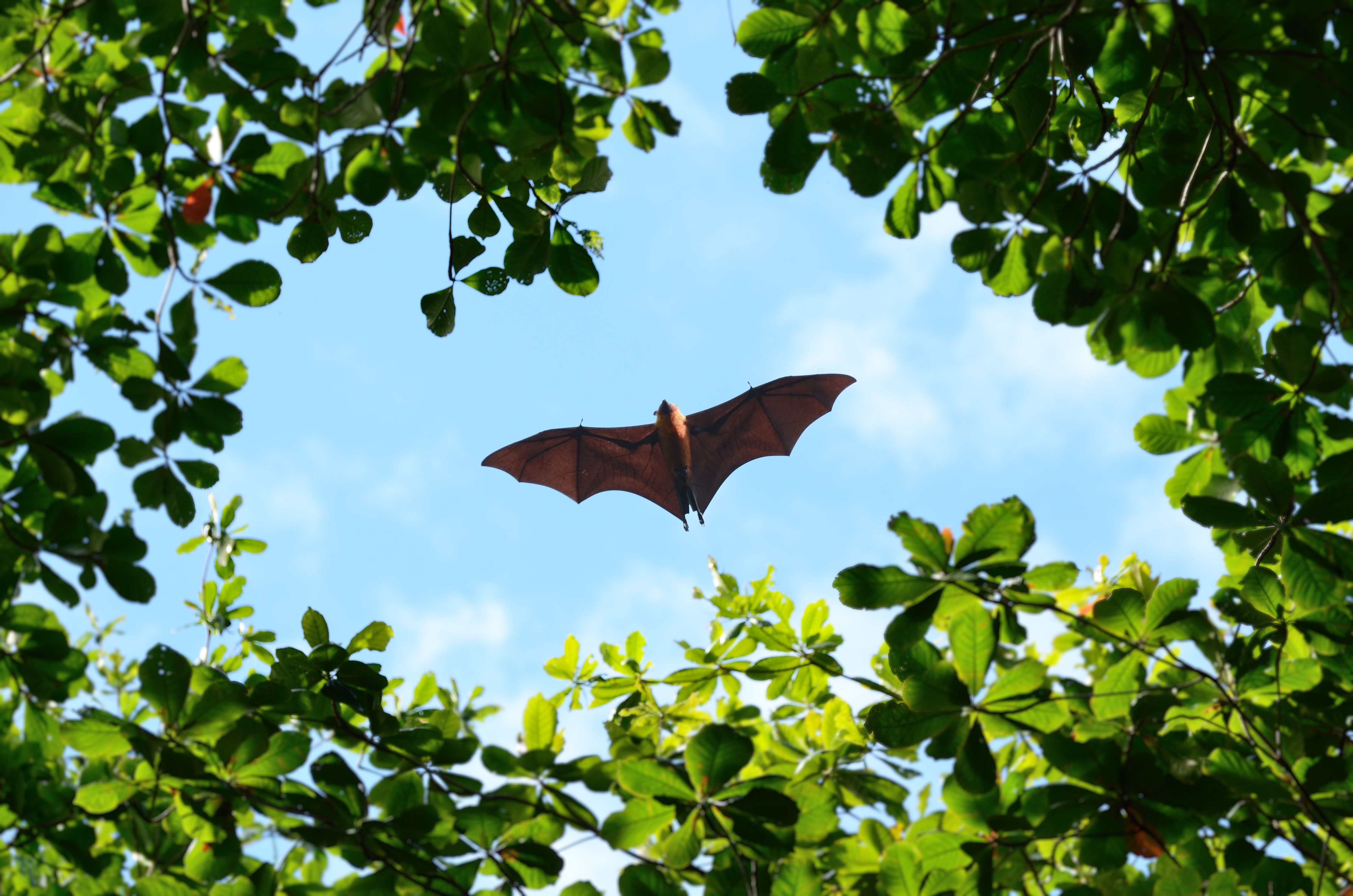 Bats can see.