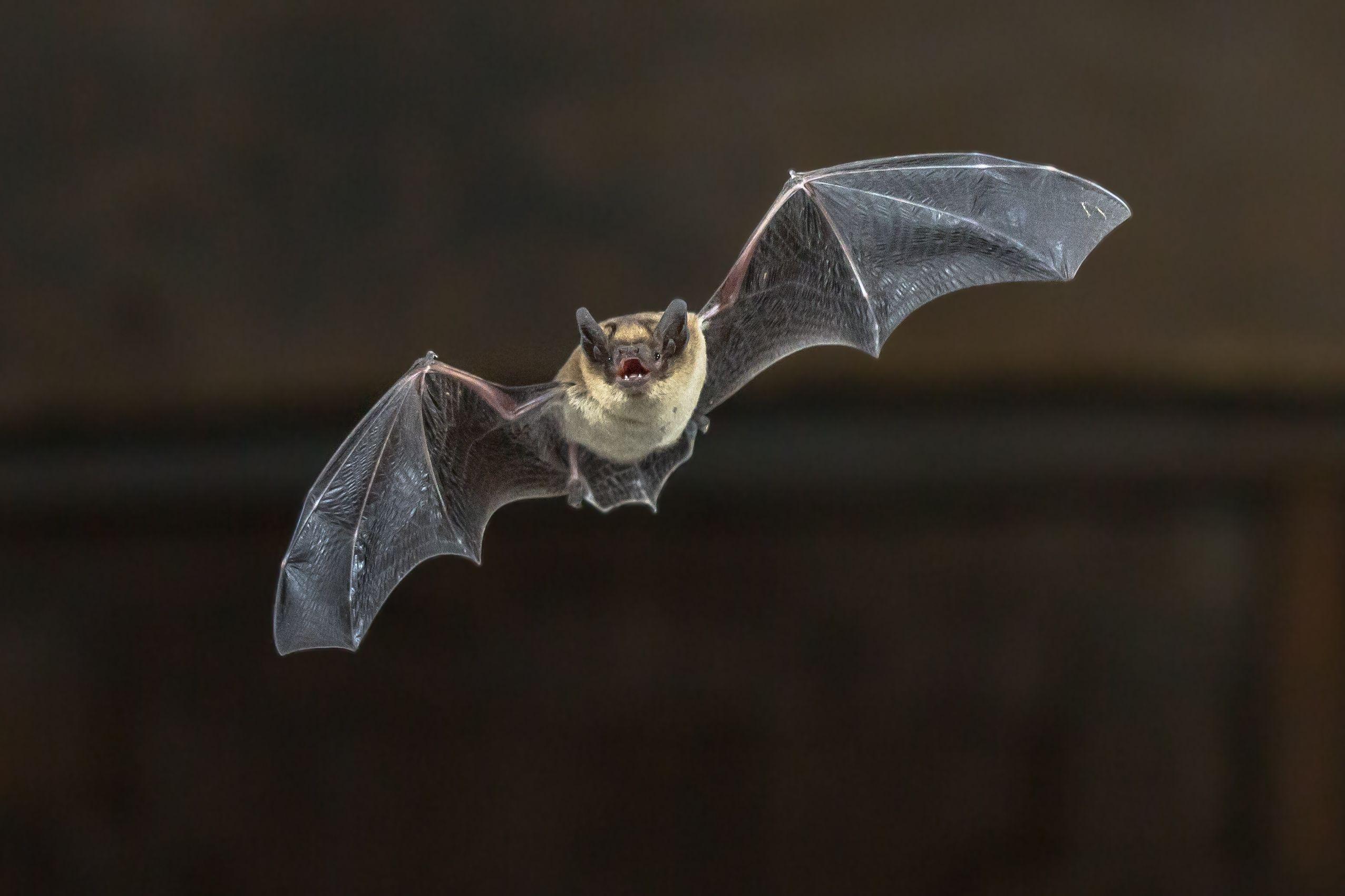 Bats have thumbs.