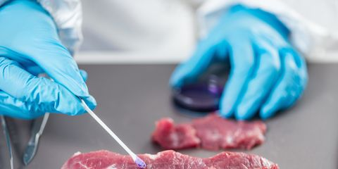 Food safety laboratory technician testing red meat