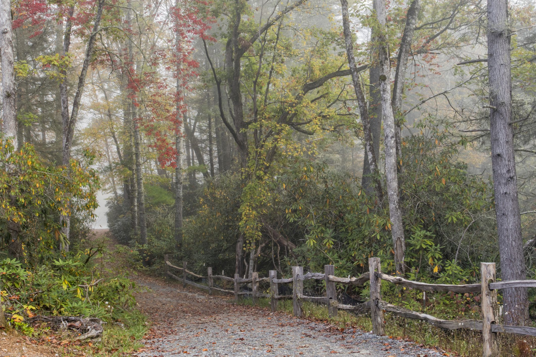 Footpath to Hooker Falls and autumn colors in fog, Dupont State Forest, near Brevard, North Carolina, USA