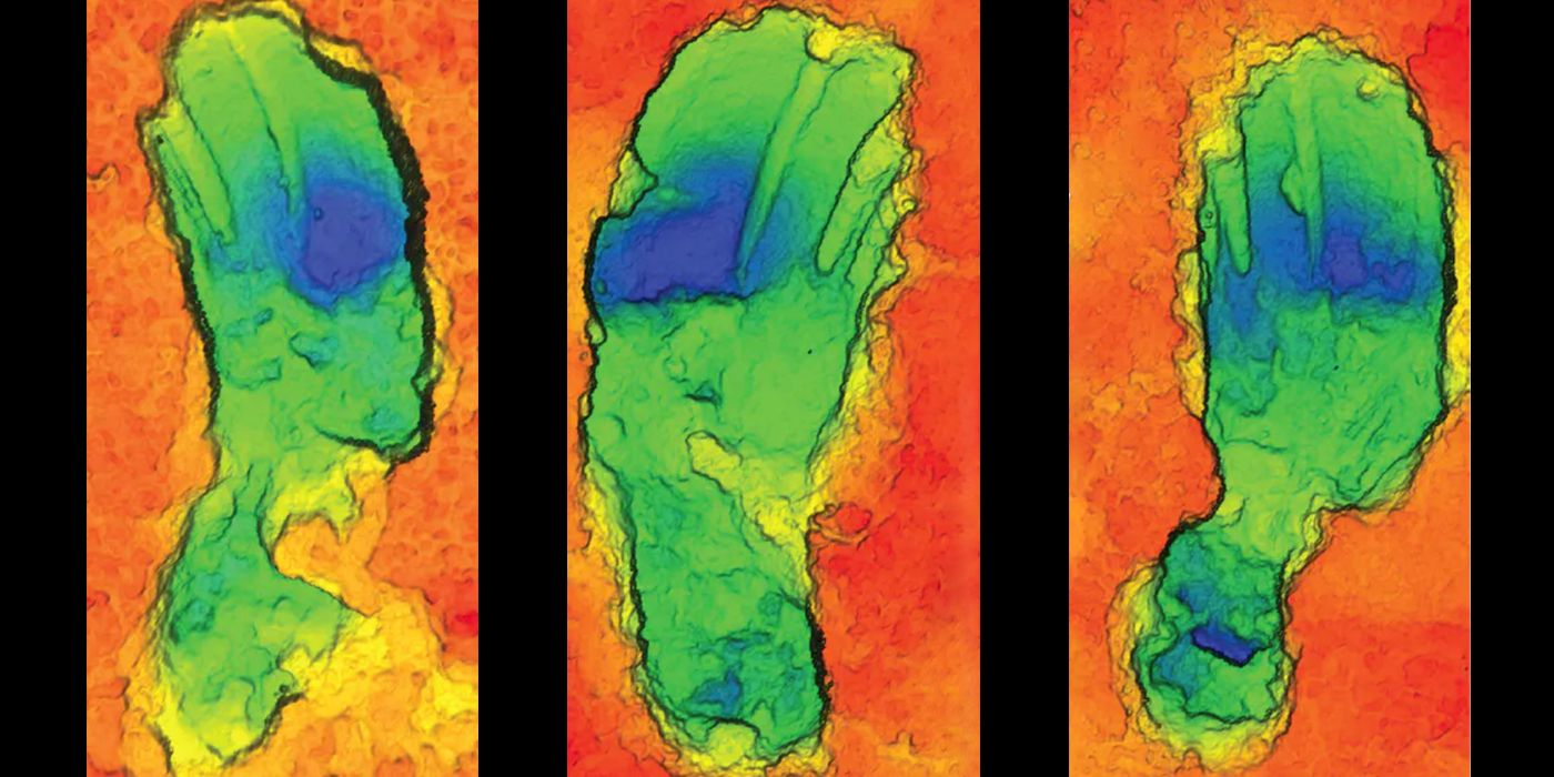 Archaeologists Found the Longest Path of Fossilized Human Footprints Ever