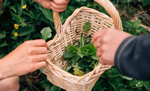 Experience days for couples - foraging