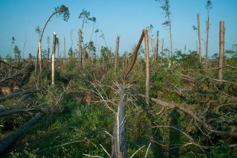 Tens of Thousands of acres of forest destroyed during storm in Poland