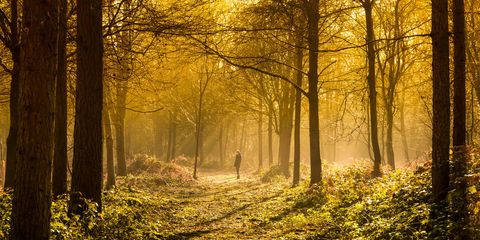 Natural landscape, Nature, People in nature, Tree, Forest, Sunlight, Natural environment, Woodland, Atmospheric phenomenon, Yellow,
