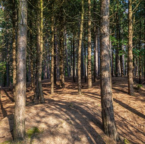woodland at formby in merseyside on a sunny summers evening
