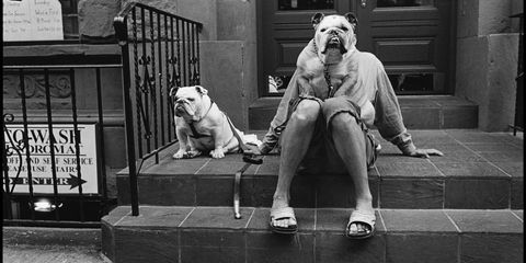 Dog breed, Dog, Carnivore, Olde english bulldogge, Snout, Wrinkle, Companion dog, Sporting Group, Sneakers, Shar pei,