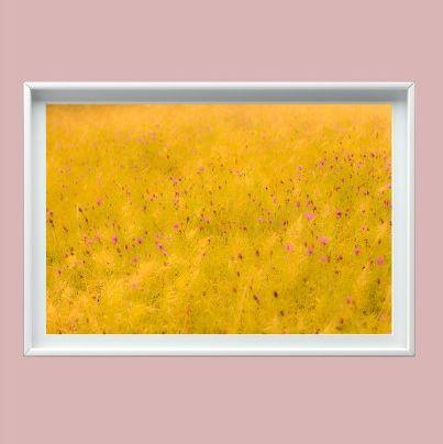 Fotografía campo amarillo
