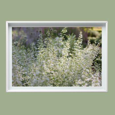 Fotografía flores blancas