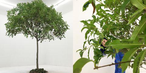 Plant, Tree, Flower, Leaf, Houseplant, Flowerpot, Woody plant, Flowering plant, Plane, Plant stem,