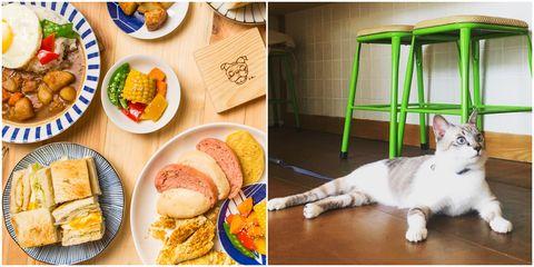 Cat, Meal, Junk food, Food, Felidae, Cuisine, Dish, Small to medium-sized cats, Breakfast, Brunch,