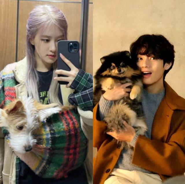 保護犬を家族に迎え入れた人気韓国セレブたちを、可愛いわんちゃんとの写真や動画と共にお届け。犬をペットとして迎える人々が増えるとともに、捨て犬の数も年々増え、社会的な問題となりつつある韓国。そんななか、保護犬の里親になり「買うより引き取ろう」と声を上げる韓国人セレブたちも。