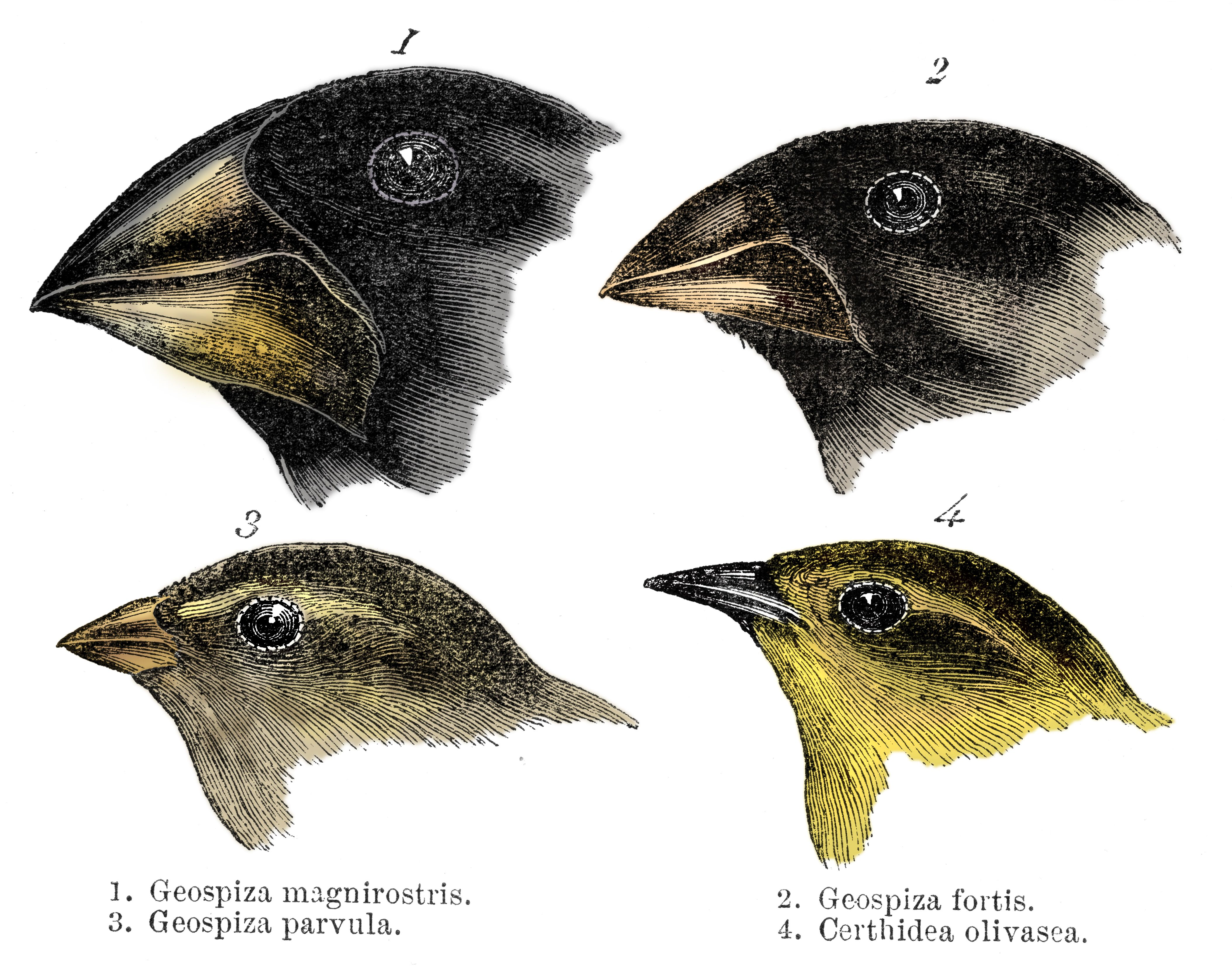 A Scientist Just Proved One of Darwin's Evolution Theories, 161 Years Later