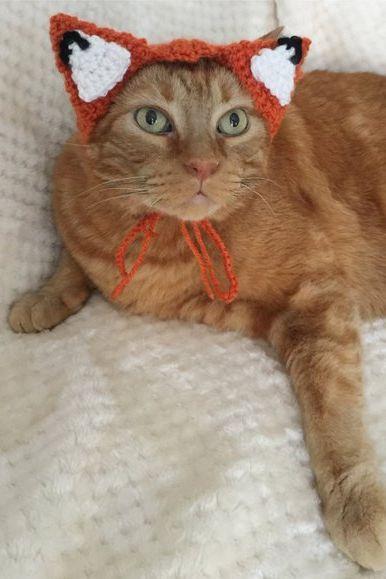 fox cat halloween costume