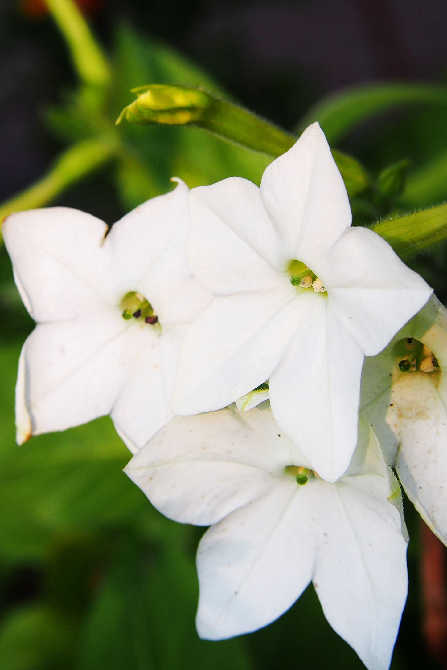 11 Fragrant Night Blooming Flowers Best Flowers That Only Bloom At