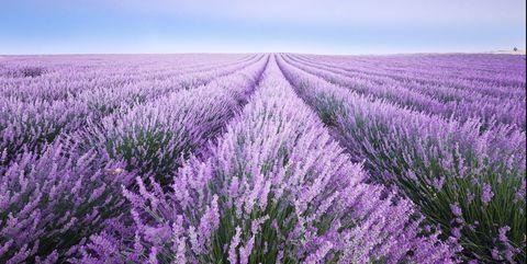 france, provence, lavender fields