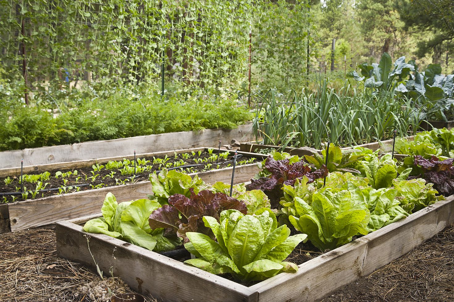 free garden plans & 16 Free Garden Design Ideas and Plans