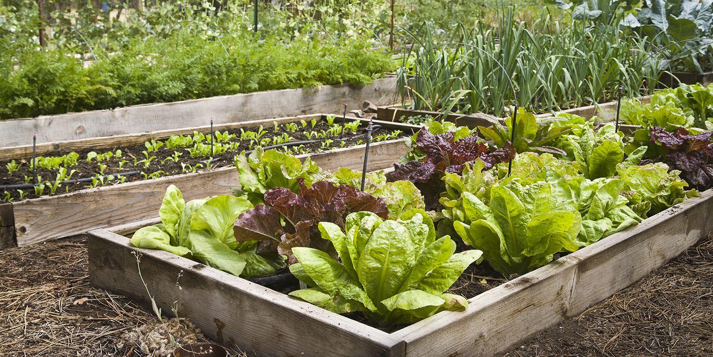 free garden plans