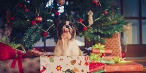 Regalar perros por Navidad es un error