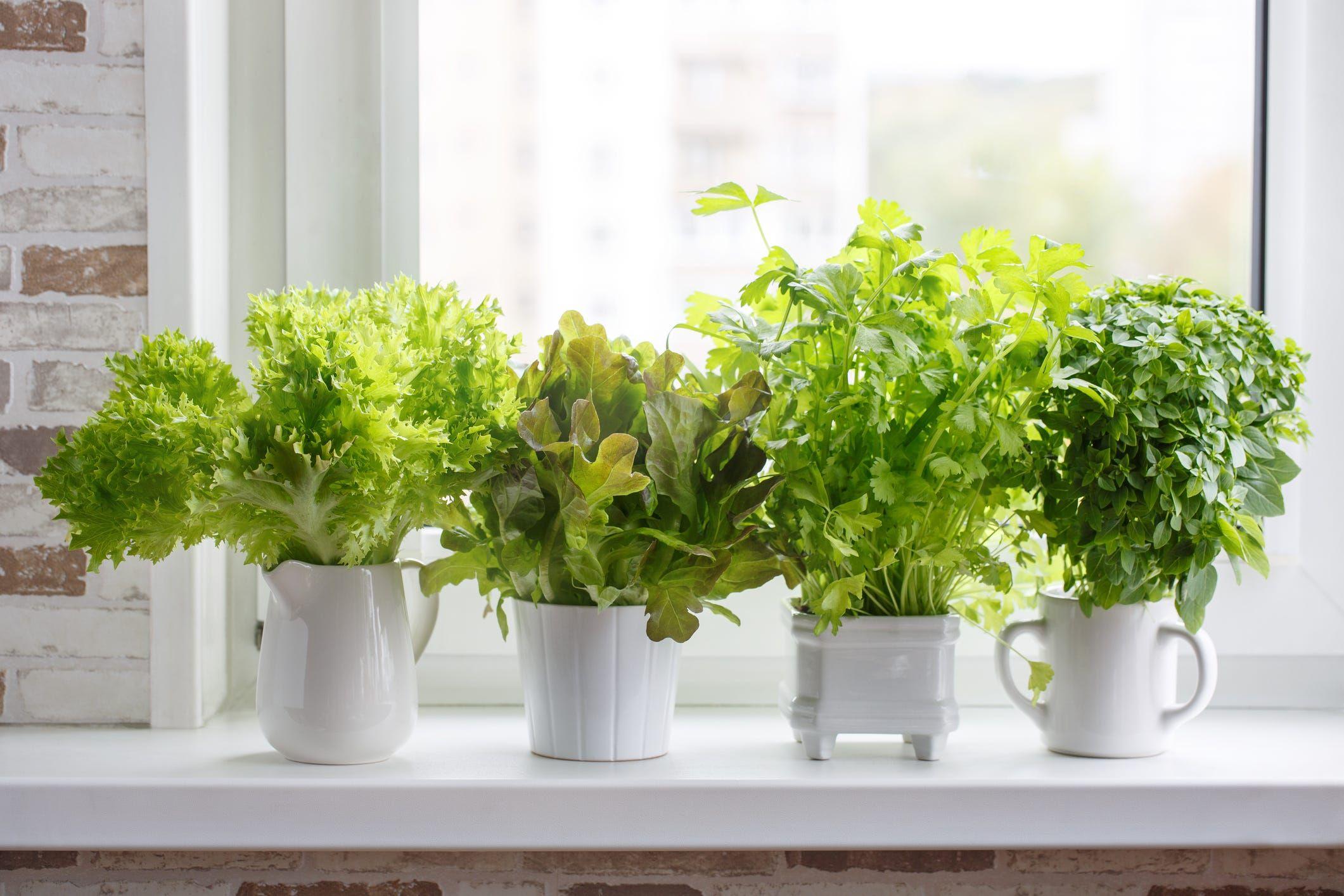 House Beautiful & 14 Indoor Herb Garden Ideas 2019 - Kitchen Herb Planters We Love