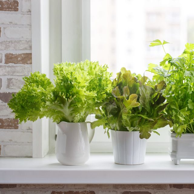 15 Indoor Herb Garden Ideas 2020 Kitchen Planters We Love