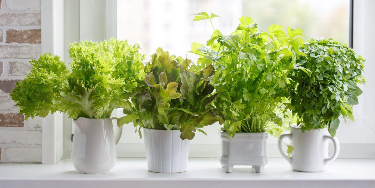 15 Indoor Herb Garden Ideas 2021 - Kitchen Herb Planters ...