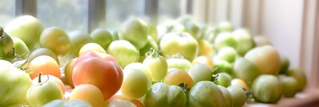 fresh heirloom tomatoes from vegetable garden ripening on sunny window sill
