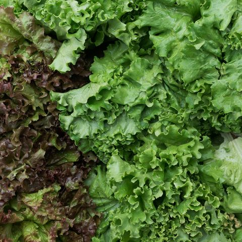 Fresh organic leafy greens for sale at a farmers market